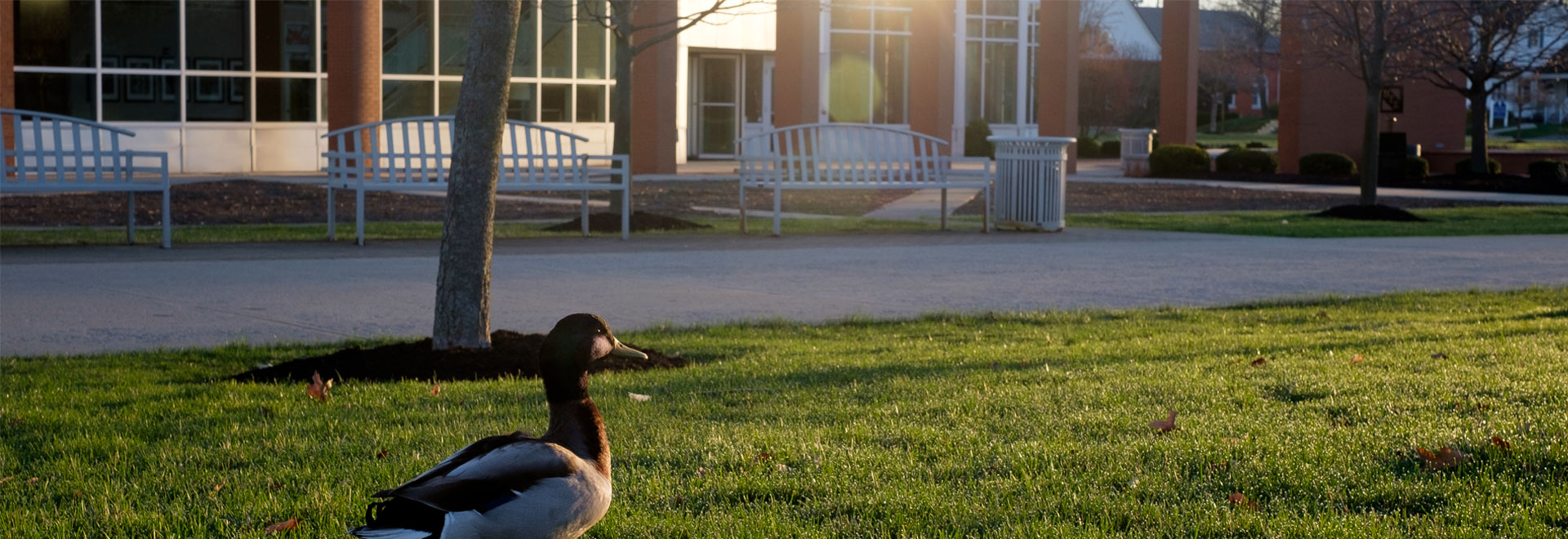 Duck sits outside the Dicke college of business